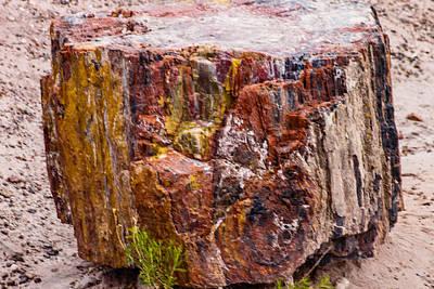 Photograph - Petrified Wood by Robert Hebert