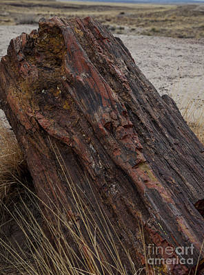 Photograph - Petrified Wood by Timothy Johnson