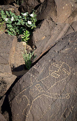 Photograph - Petroglyph And Sacred Datura - Petroglyph National Monument by Mary Lee Dereske