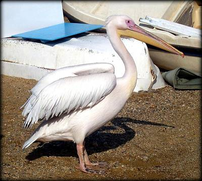 Photograph - Petros The Pelican  by Carla Parris