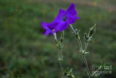 Purple Petunia Botanical Study Original by ARTography by Pamela Smale Williams