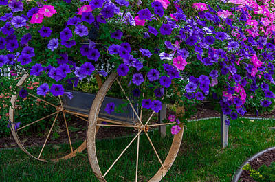 Photograph - Petunias Allacart by Gene Sherrill