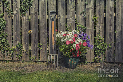 Photograph - Petunias by Jim Orr