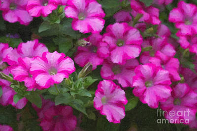 Petunia Digital Art - Petunias Oil Painting by Jill Lang