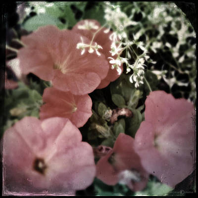 Photograph - Petunias by Tim Nyberg