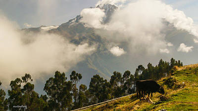 Photograph - Peru Mountains With Cow by Allen Sheffield