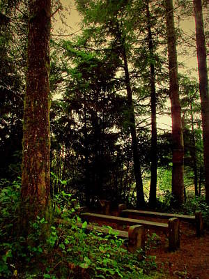 Photograph - Pews In The Forest Two by Joyce Dickens