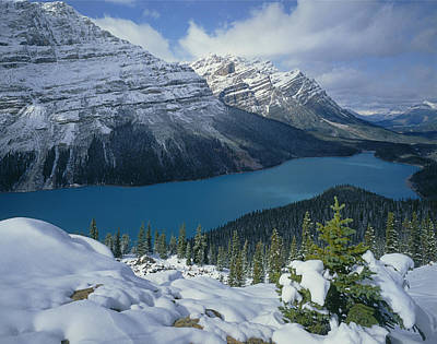Photograph - 1m3639-peyto Lake After Snowfall,canadian Rockies by Ed  Cooper Photography