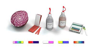 Red Cabbage Photograph - Ph Indicators by Mikkel Juul Jensen