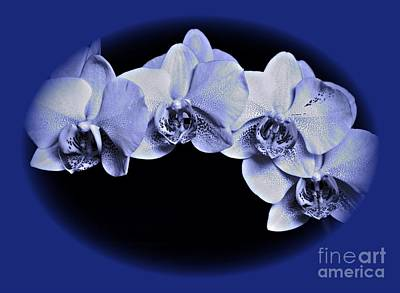 Photograph - Phalaenopsis 2 by Chalet Roome-Rigdon
