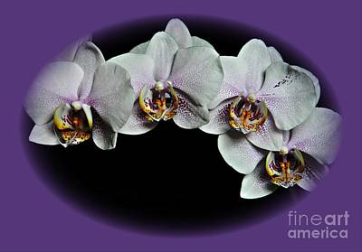 Photograph - Phalaenopsis by Chalet Roome-Rigdon