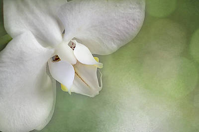 Photograph - Phalaenopsis Face by Carol Erikson