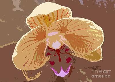 Photograph - Phalaenopsis Synopsis by Barbie Corbett-Newmin