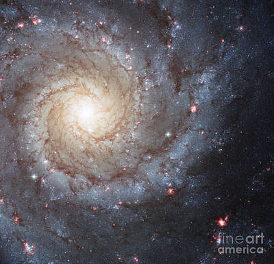 Heavenly Body Photograph - Phantom Galaxy M74 by Science Source