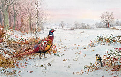 Bullfinch Wall Art - Painting - Pheasant And Bramblefinch In The Snow by Carl Donner