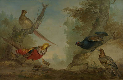 Pheasant Drawing - Pheasants, Aert Schouman by Litz Collection