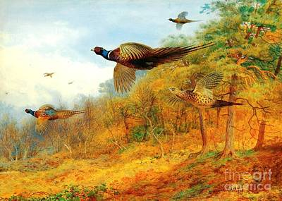 Fauna Painting - Pheasants Breaking Cover by Pg Reproductions