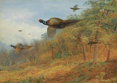 Celestial Painting - Pheasants Breaking Out Of Cover by Celestial Images