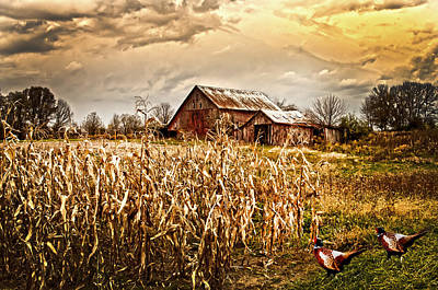 Barn Lots Photograph - Pheasants Heading For Corn Patch by Randall Branham