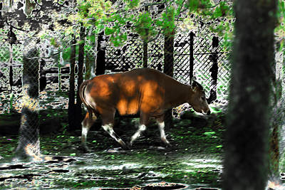 Phenomena Of Banteng Walk Art Print