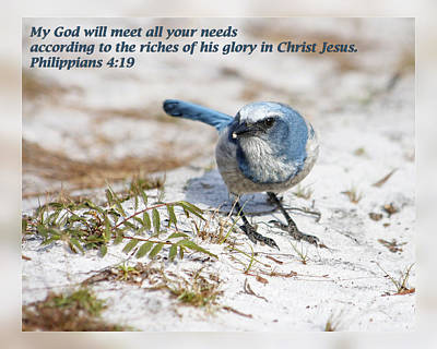 Photograph - Philippians 4 19 by Dawn Currie