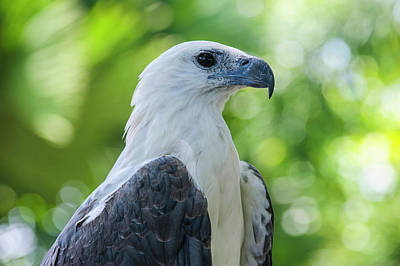 Monkey Photograph - Philippine Eagle (pithecophaga Jefferyi by Michael Runkel