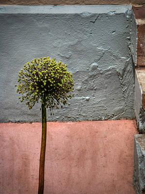 Philly Plant Art Print by Glenn DiPaola