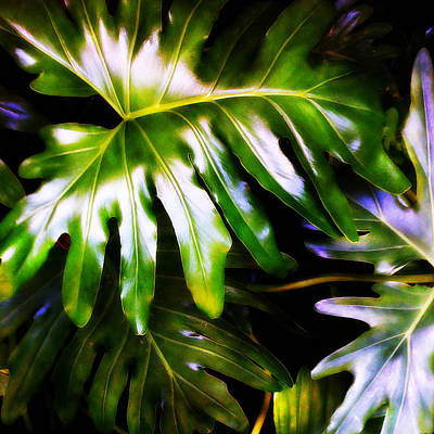 Digital Art - Philodendron by Matt Lindley