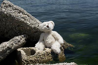 Teddybear Photograph - Philosopher by William Patrick