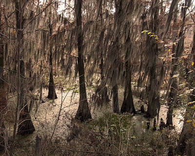 Phinizy Swamp Nature Park #1 Original by Paul Cannon