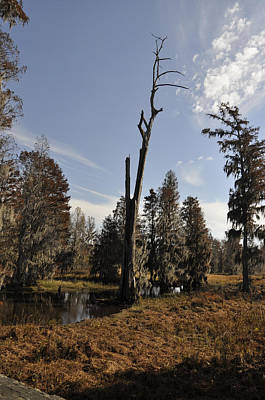 Phinizy Swamp Nature Park #4 Original by Paul Cannon