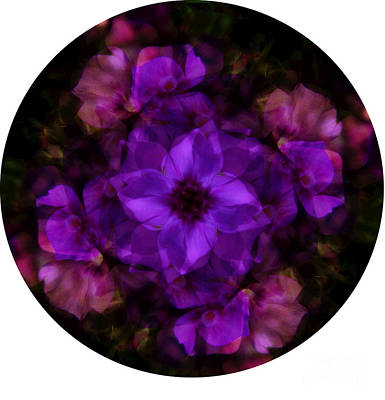 Digital Art - Phlox Kaleidoscope by D Hackett