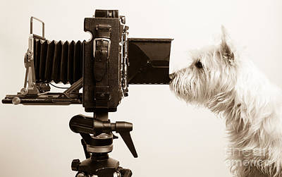 White Dogs Photograph - Pho Dog Grapher by Edward Fielding