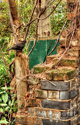 Photograph - Phoenix Garden Crow by Deborah Smolinske
