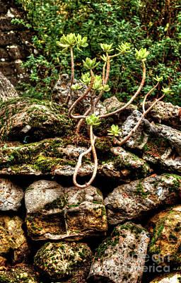 London Photograph - Phoenix Garden Rock Wall by Deborah Smolinske