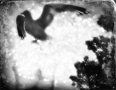 Phoenix IIi Art Print by Aurelio Zucco