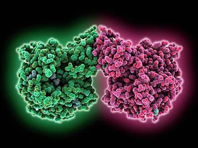 Phosphocholine Transferase Enzyme Art Print