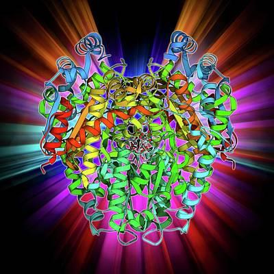 Phosphoglucose Isomerase Molecule Art Print