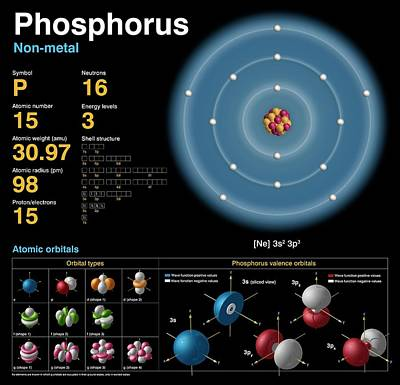 Neutron Photograph - Phosphorus by Carlos Clarivan