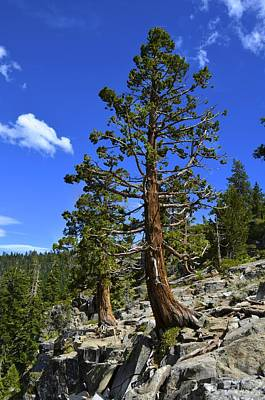 Trees Near Emerald Bay Lake Tahoe Art Print