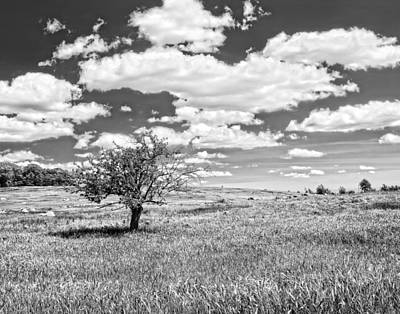 Photograph - Photo Of Single Apple Tree In Maine Blueberry Field by Keith Webber Jr