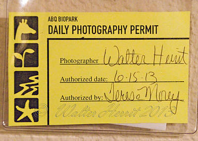 Photograph - Photo Permit by Walter Herrit