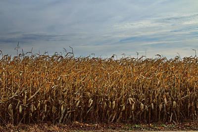 Cornfield Photograph - Photograph Of An Autumn Cornfield by Randall Nyhof