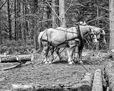 Photograph - Photograph Of Horses Pulling Logs In Maine Forest by Keith Webber Jr