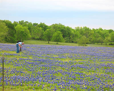 Photographing Texas Bluebonnets Art Print by Connie Fox