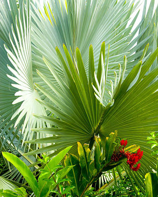 Photograph - Bismark Palm by Jim Snyder