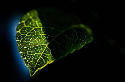 Photosynthesis Neighborhoods Art Print by Brian Xavier