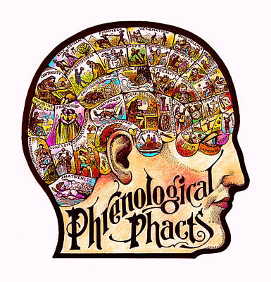 Self Awareness Mixed Media - Phrenological Phacts by Dale Michels