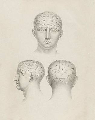 Phrenology Head Regions Art Print by King's College London