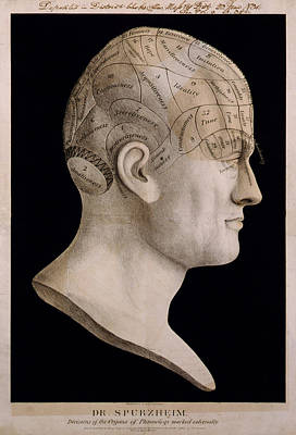 Phrenology Art Print by Georgia Fowler